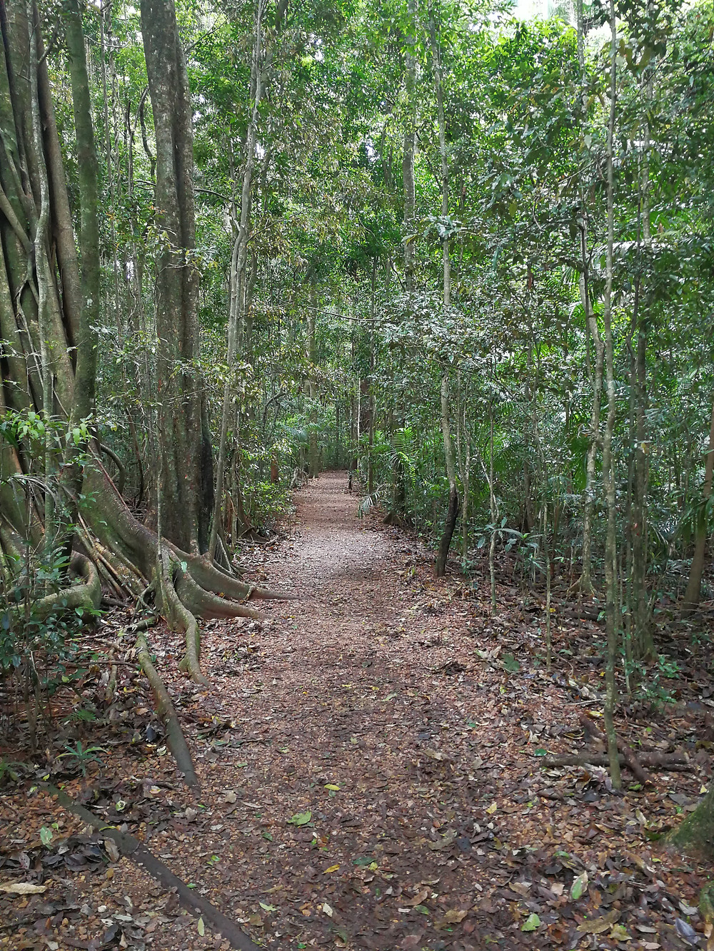 Nature walk with clear paths