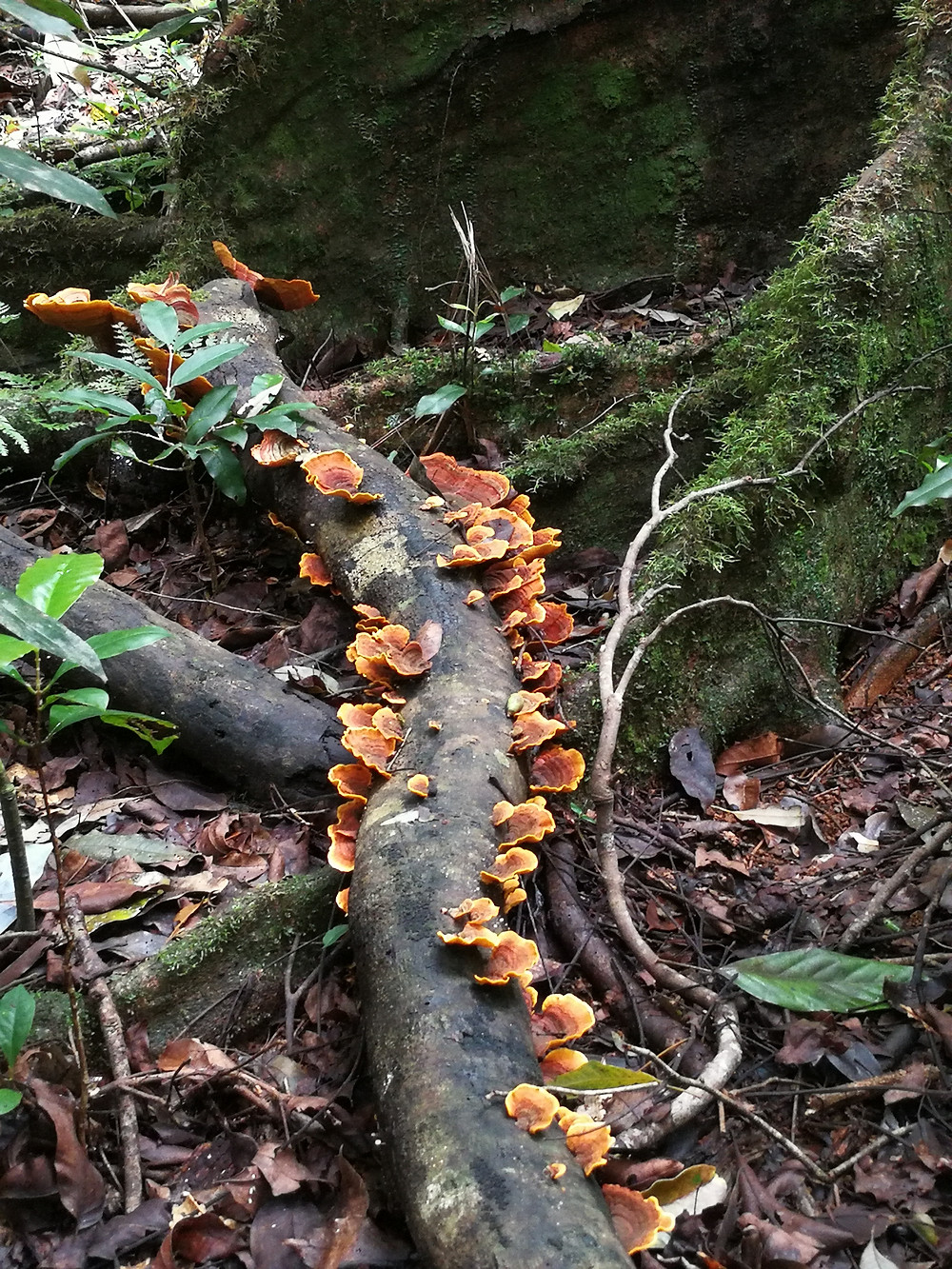 Mushroom growing on dead tree barks