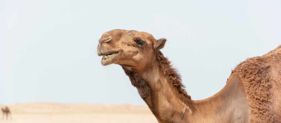 THROW AWAY THE UNICORNS; KEEP THE CAMELS.