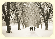 Christmas Card Printing in Cambridge