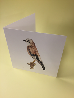 Little Bird Art Studio - Jay