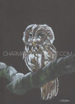 Night Owl £180