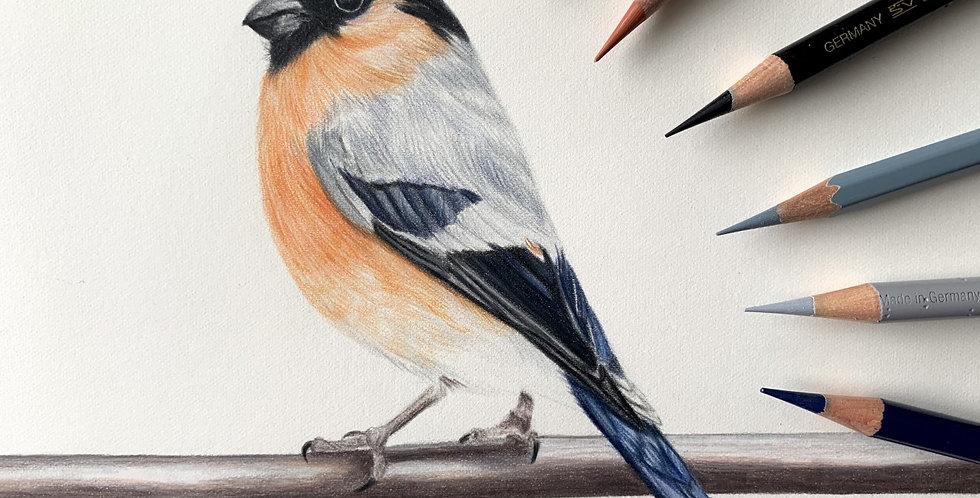 The Bullfinch