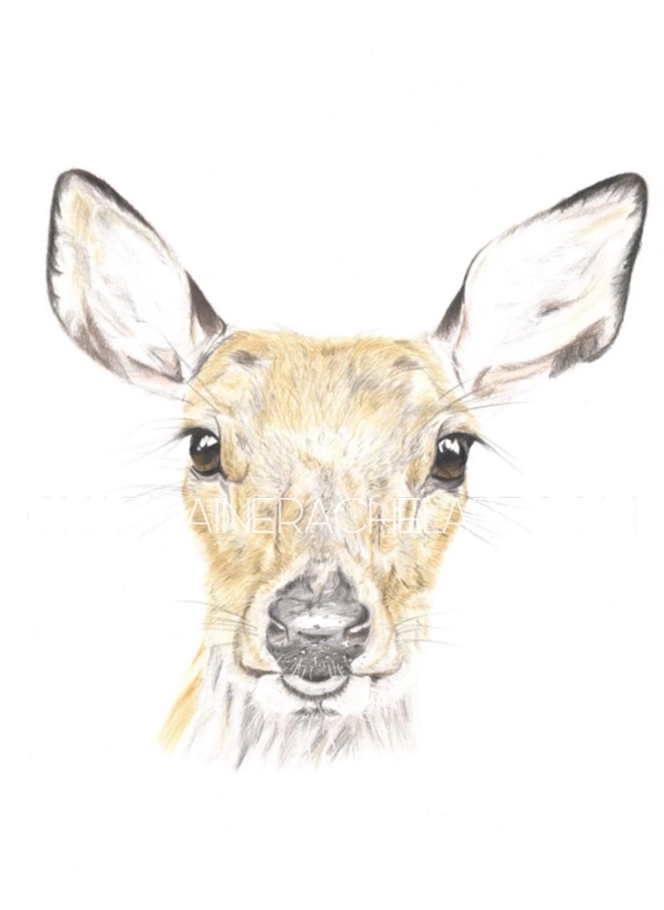 Mother Deer £200