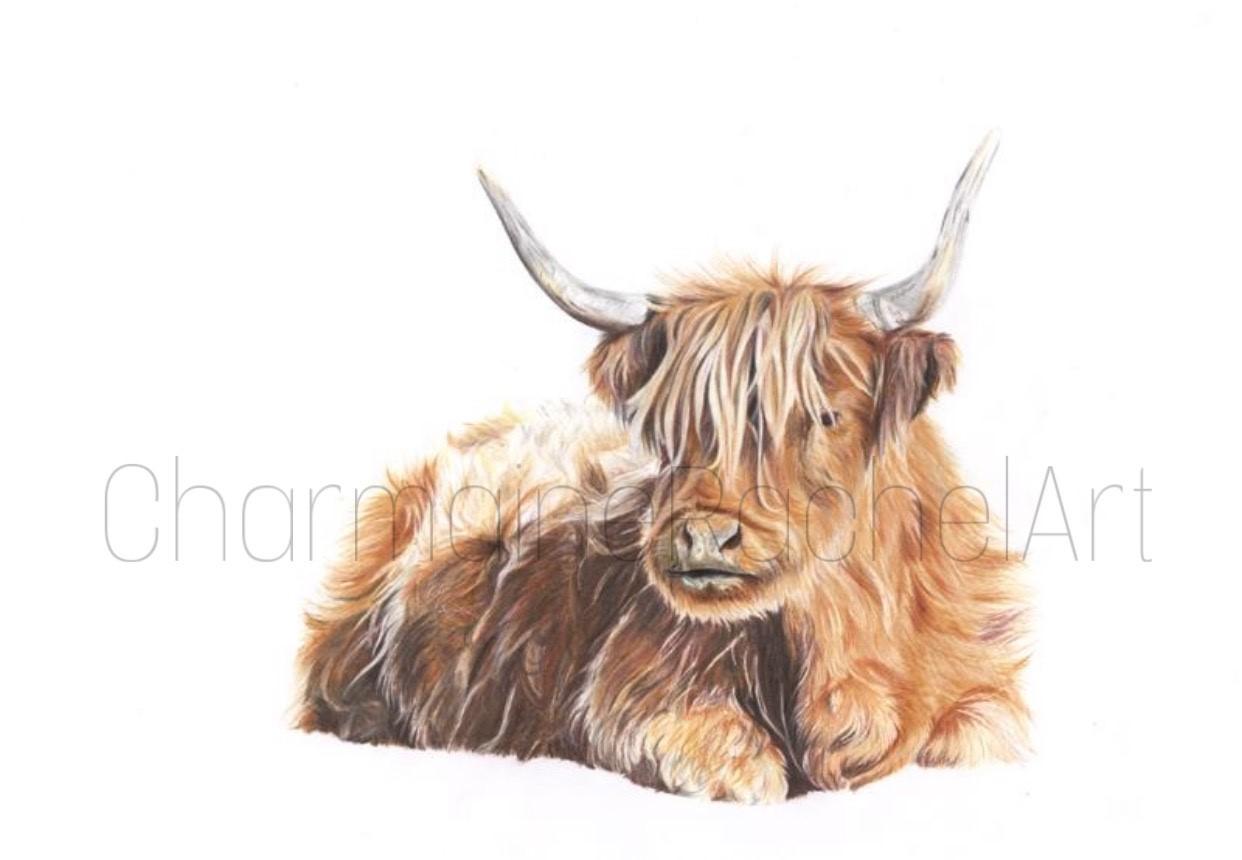 Highland Cow £350