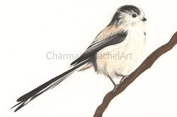 The Long-Tailed Tit £150