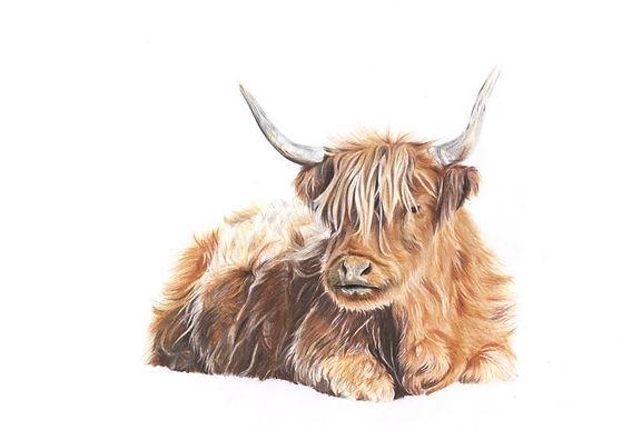 Highland Cow UNWATERMARKED.jpg