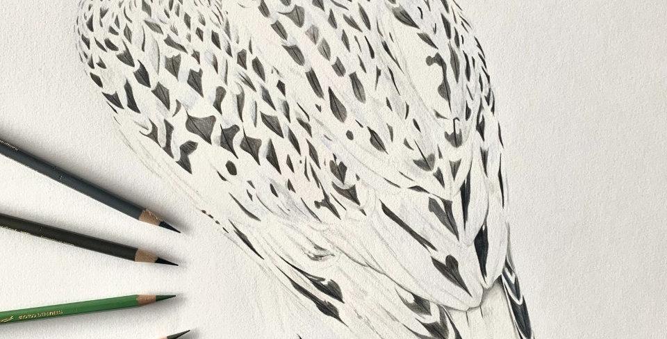Odin - White Gyr Falcon