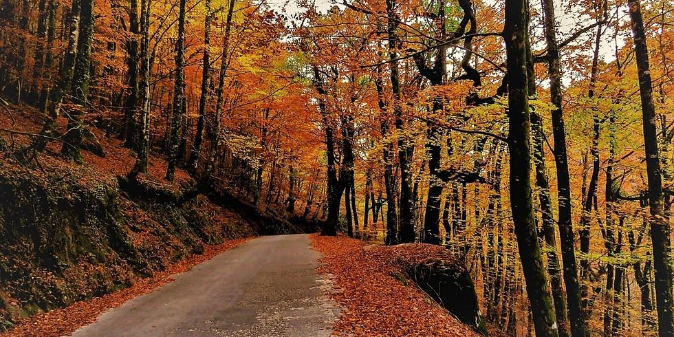 Outono na Albergaria Gerês