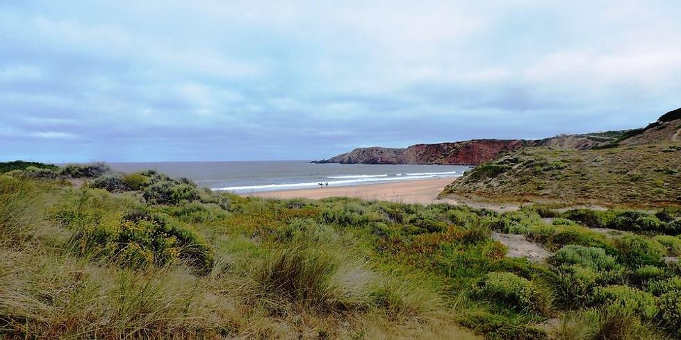Vila do Bispo - Praia do Amado