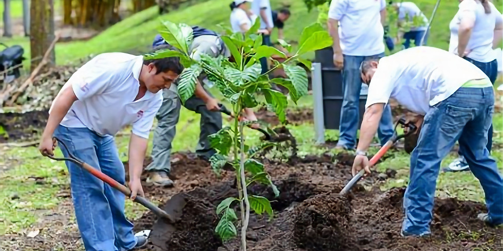 POSTPONED: DAC Tree Planting Event