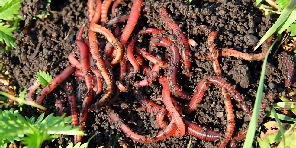 Build Your Own Vermicomposting Bin