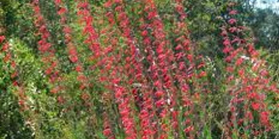 Managing Native Plants for Wildlife Habitat and Ecological Integrity Webinar