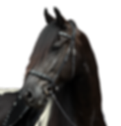 Brilliant headstall ISO 2 .png