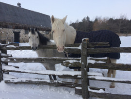 the girls wait patient for their carrots