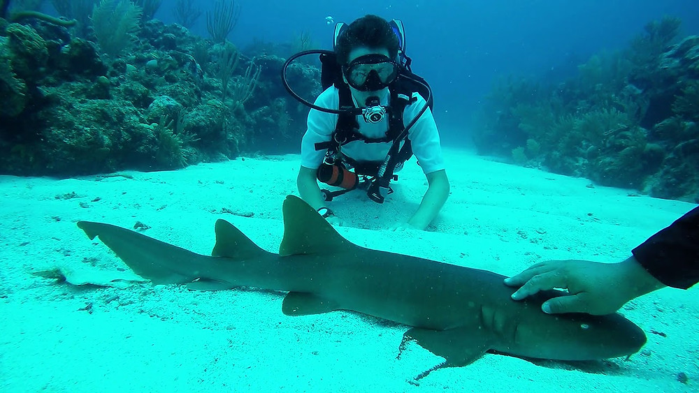 a scuba diver poses with a nurse shark in the coral reef for a cool picture