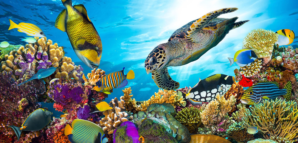 a beautifully vibrant coral reef with fish and turtles swimming around