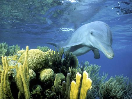 Scuba Diving Belize's Barrier Reef