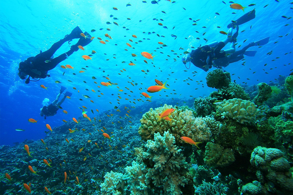 Scuba diving the beautiful Turneffe Atoll in Belize with vibrant coral and fish
