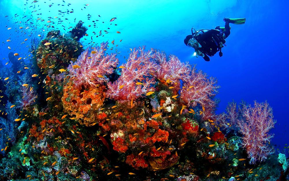 Scuba diving the Atolls in Sand Pedro, Belize