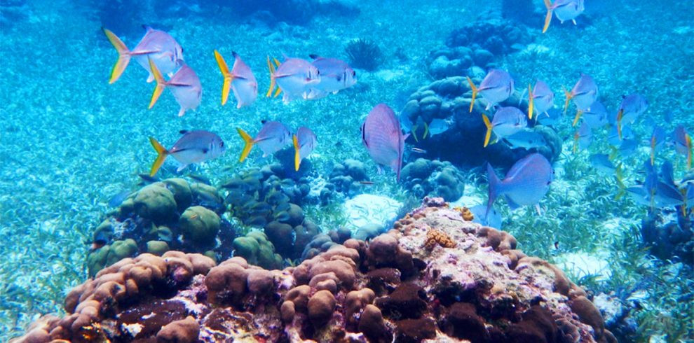 Hol chan marine reserve underwater picture showing fish and reef