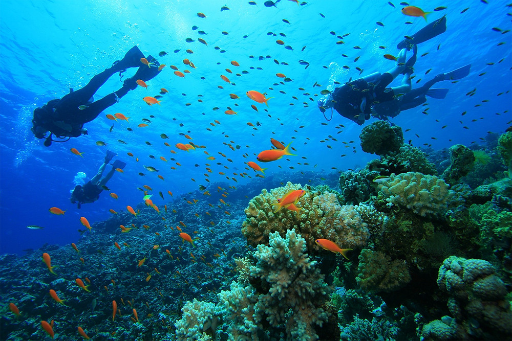 A group of scuba divers enjoying a beautiful dive in Ambergris Caye in San Pedro, Belize