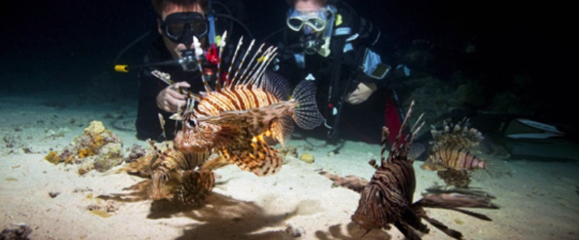 Scuba divers seeing lionfish at the bottom of a night dive