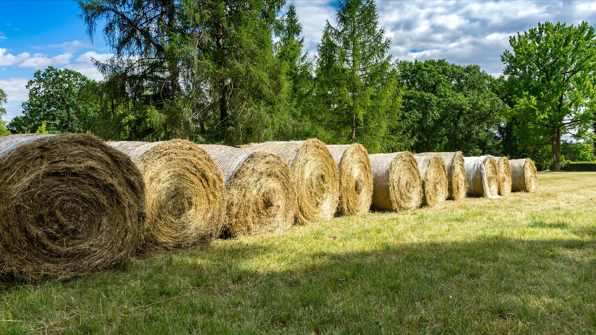 hay-bales-3526962_1920