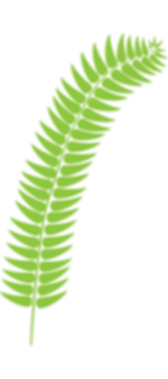 fern_light_green.png