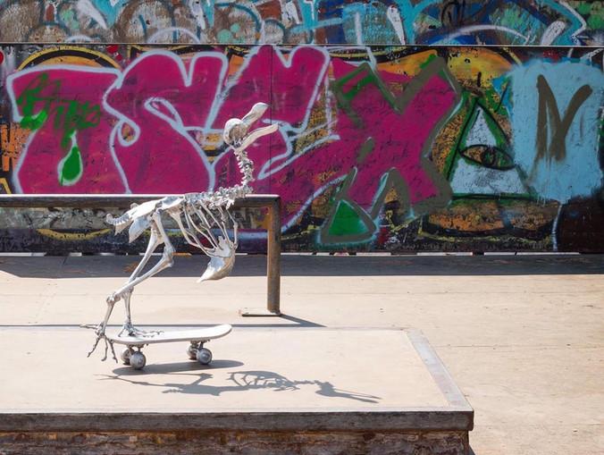 Dodo Skate