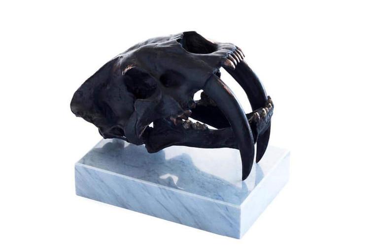 Crâne Smilodon II