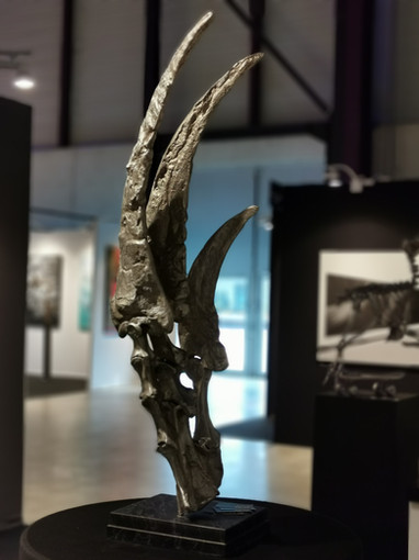 Nageoire de Basilosaurus