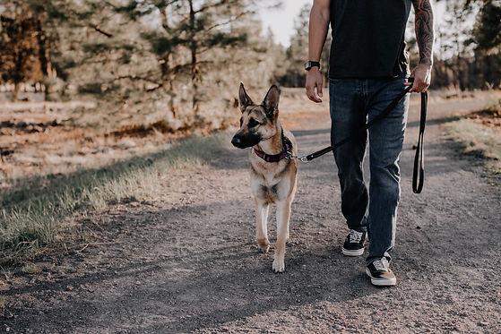 left-Dog Walking-1.jpg