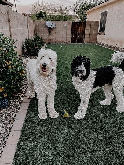 Surprise-AZ-dog-trainers-1.jpg