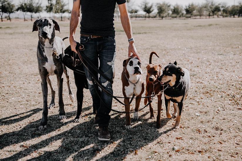 Multiple Dogs Walking-1.jpg
