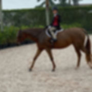 Looking for a full time show groom/rider