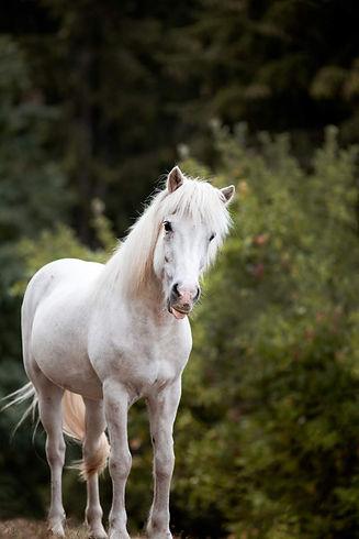 Ponybande-11-912x1368.jpg