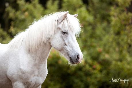 Ponybande-10.jpg