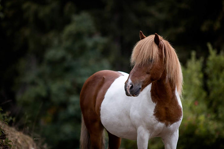 Ponybande-6-1368x912.jpg