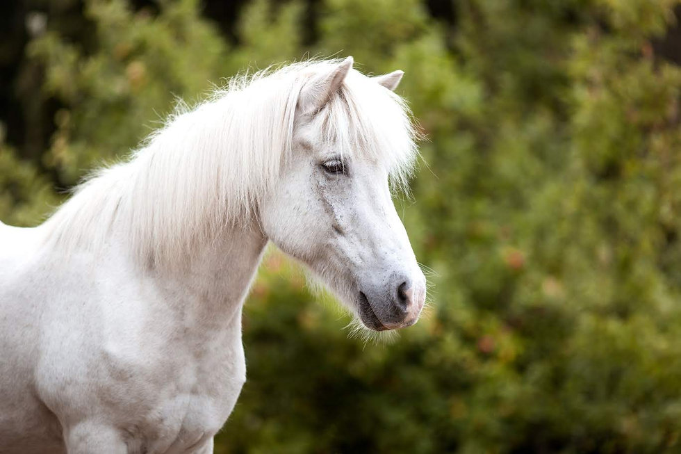 Ponybande-10-1368x912.jpg