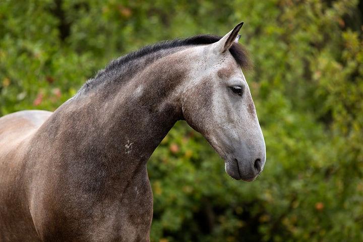 Ponybande-13-1368x912.jpg