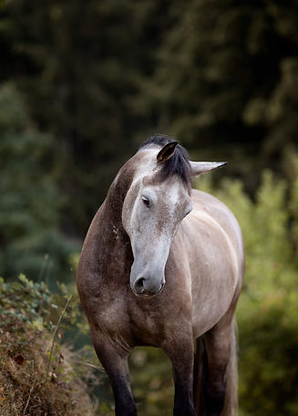 Ponybande-16-1368x1907.jpg
