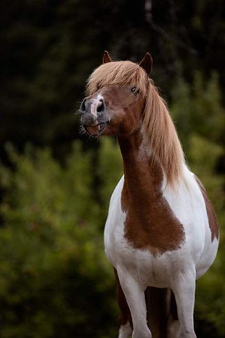 Ponybande-5-912x1368.jpg