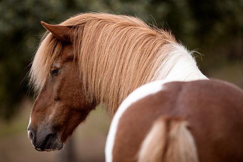 Ponybande-1-1368x912.jpg