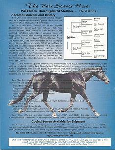 Ruby sire stallion info pg 1.jpg