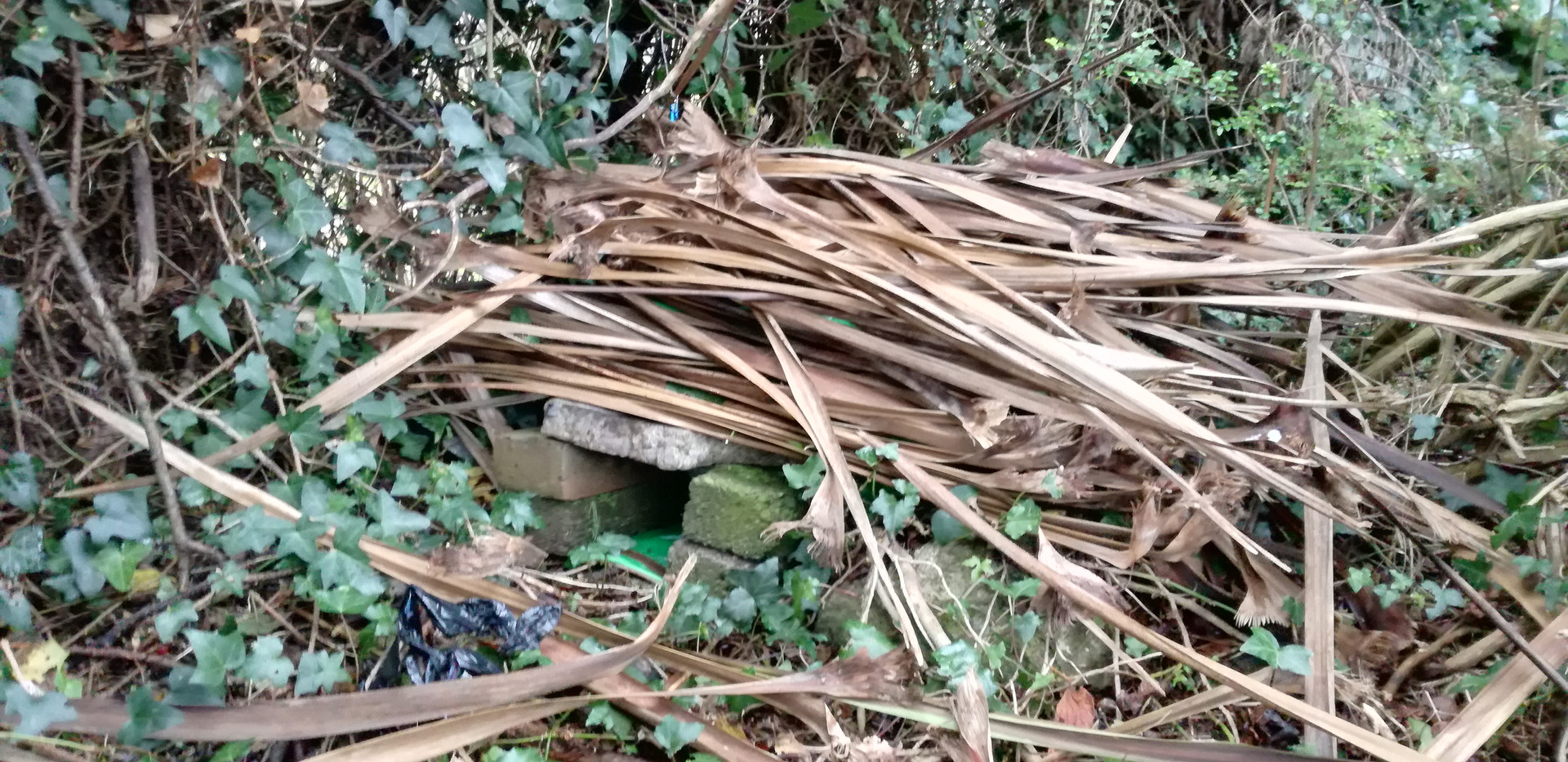 Our finished hedgehog home