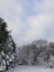 winterland in the backyard.jpg