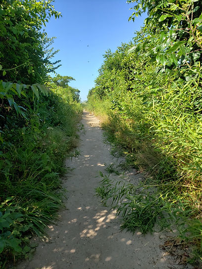 The Trail at Meig's Point.jpg