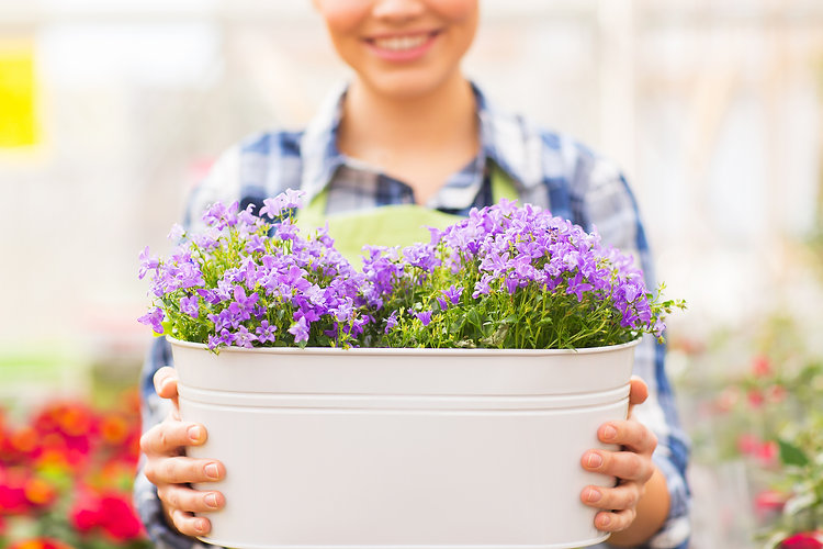 clean and sober woman growing flowers