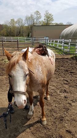 Pony Therapy is Great for Recovery.jpg